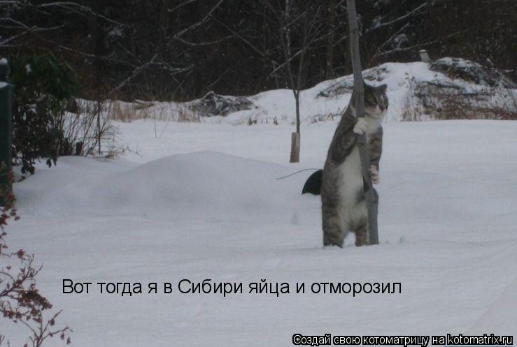 Котоматрица: Вот тогда я в Сибири яйца и отморозил