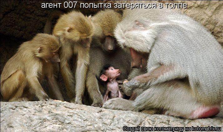 Котоматрица: агент 007 попытка затеряться в толпе