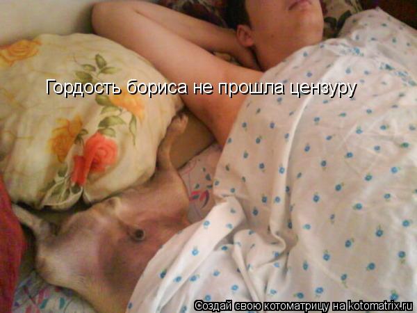 Котоматрица: Гордость бориса не прошла цензуру