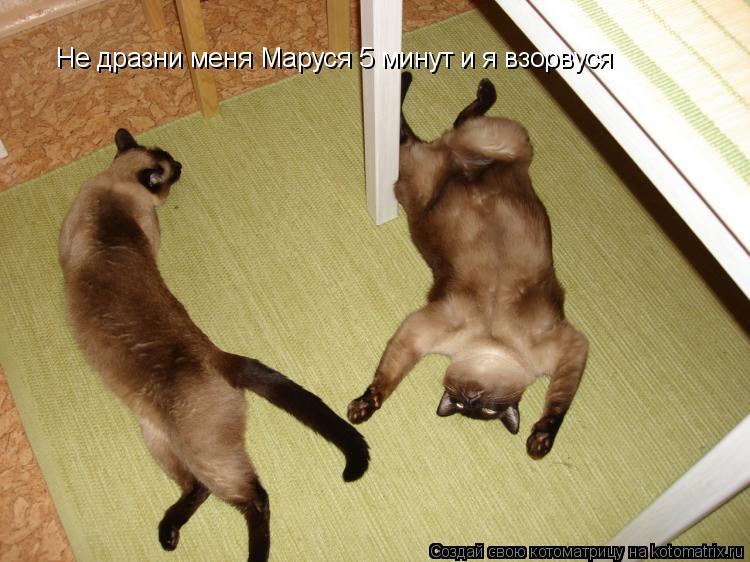 Котоматрица: Не дразни меня Маруся 5 минут и я взорвуся