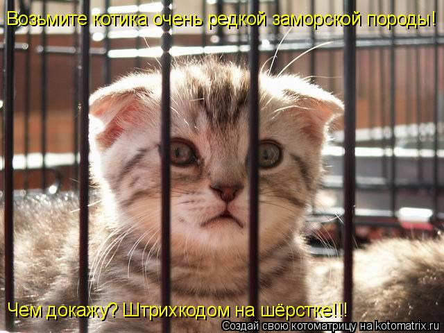 Котоматрица: Возьмите котика очень редкой заморской породы! Чем докажу? Штрихкодом на шёрстке!!!
