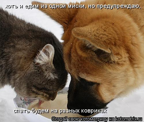 Котоматрица: хотъ и едим из одной миски, но предупреждаю,  спатъ будем на разных ковриках