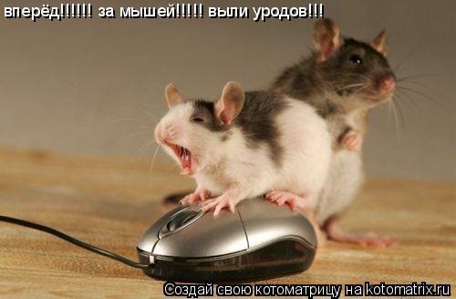 Котоматрица: вперёд!!!!!! за мышей!!!!! выли уродов!!!