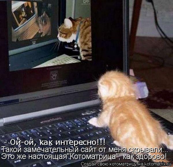 """Котоматрица: - Ой-ой, как интересно!!! Такой замечательный сайт от меня скрывали... Это же настоящая""""Котоматрица"""", как здорово!"""