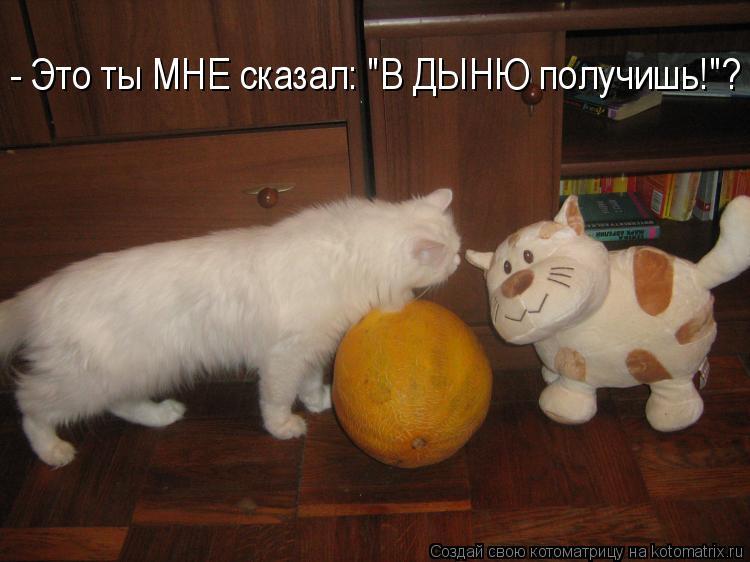 """Котоматрица: - Это ты МНЕ сказал: """"В ДЫНЮ получишь!""""?"""