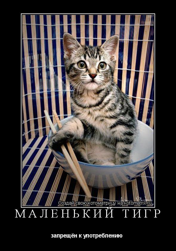 Котоматрица: маленький тигр запрещён к употреблению