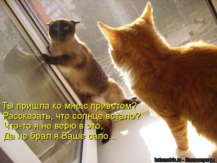 Котоматрица: Ты пришла ко мне с приветом? Рассказать, что солнце встало? Что-то я не верю в это, Да не брал я Ваше сало...