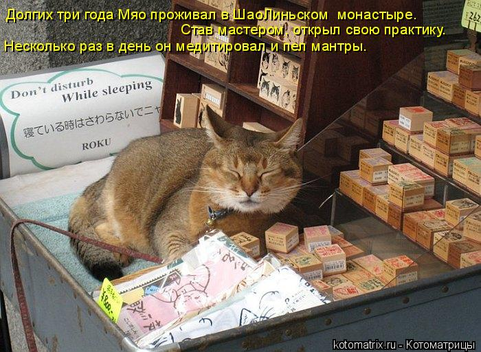 Котоматрица: Долгих три года Мяо проживал в ШаоЛиньском  монастыре.  Став мастером, открыл свою практику. Несколько раз в день он медитировал и пел мантр