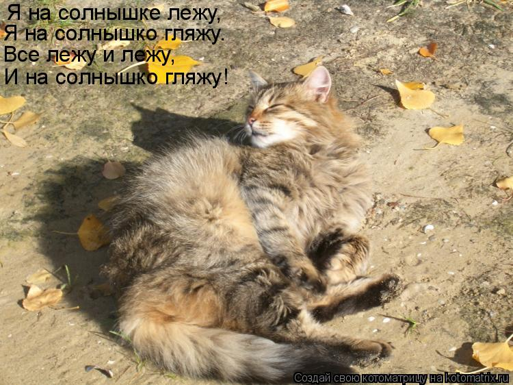 Котоматрица: Я на солнышке лежу, Я на солнышко гляжу.  Все лежу и лежу,  И на солнышко гляжу!