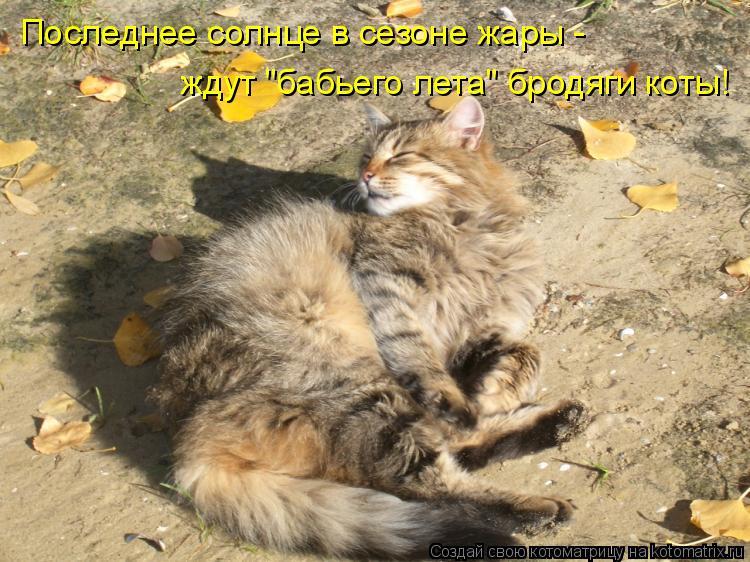 """Котоматрица: Последнее солнце в сезоне жары - ждут """"бабьего лета"""" бродяги коты!"""