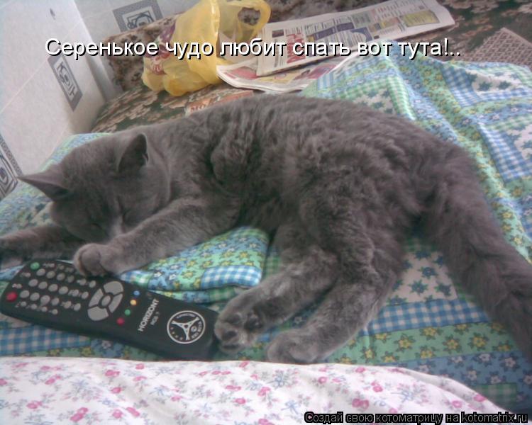 Котоматрица: Серенькое чудо любит спать вот тута!..