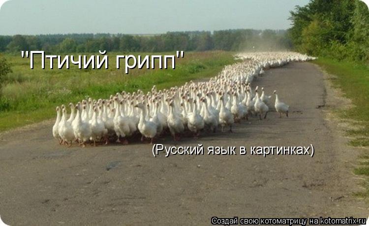"""Котоматрица: """"Птичий грипп"""" (Русский язык в картинках)"""