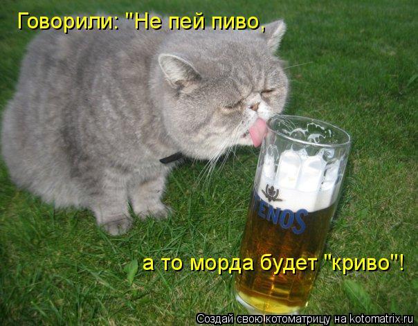 "Котоматрица: Говорили: ""Не пей пиво, а то морда будет ""криво""!"