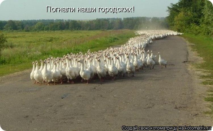 Котоматрица: Погнали наши городских!