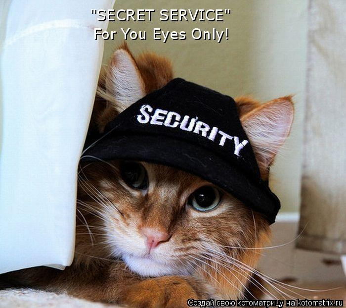 "Котоматрица: ""SECRET SERVICE"" For You Eyes Only!"