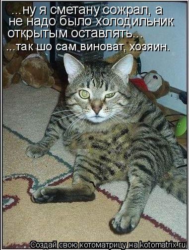 Котоматрица: ...ну я сметану сожрал, а не надо было холодильник открытым оставлять... ...так шо сам виноват, хозяин.
