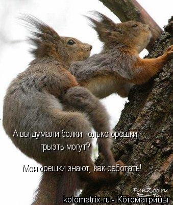 Котоматрица: А вы думали белки только орешки  грызть могут? Мои орешки знают, как работать!
