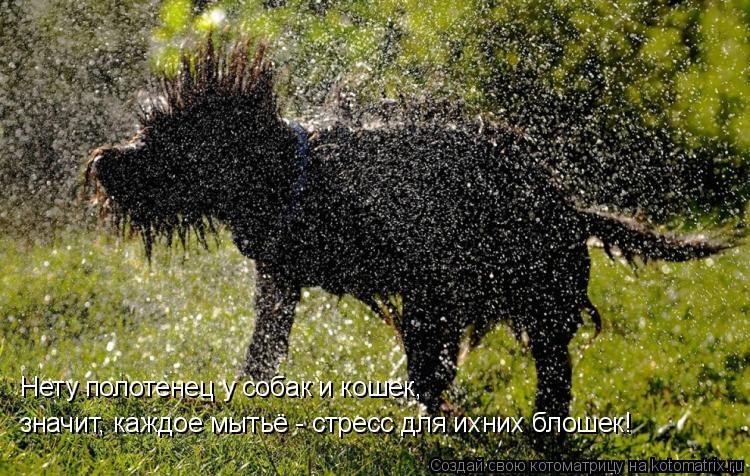 Котоматрица: Нету полотенец у собак и кошек,  значит, каждое мытьё - стресс для ихних блошек!