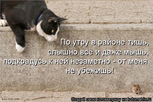 Котоматрица: По утру в районе тишь, слышно всё и даже мышь, подкрадусь к ней незаметно - от меня  не убежишь!