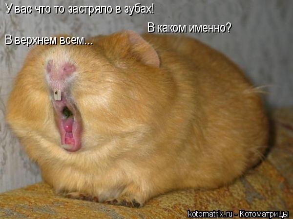 Котоматрица: У вас что то застряло в зубах! В каком именно? В верхнем всем...