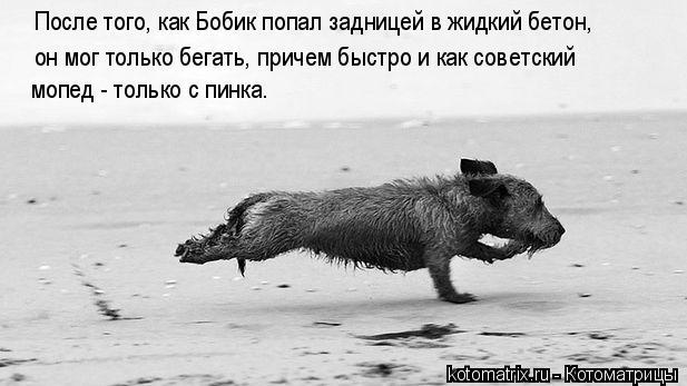 Котоматрица: После того, как Бобик попал задницей в жидкий бетон, он мог только бегать, причем быстро и как советский мопед - только с пинка.