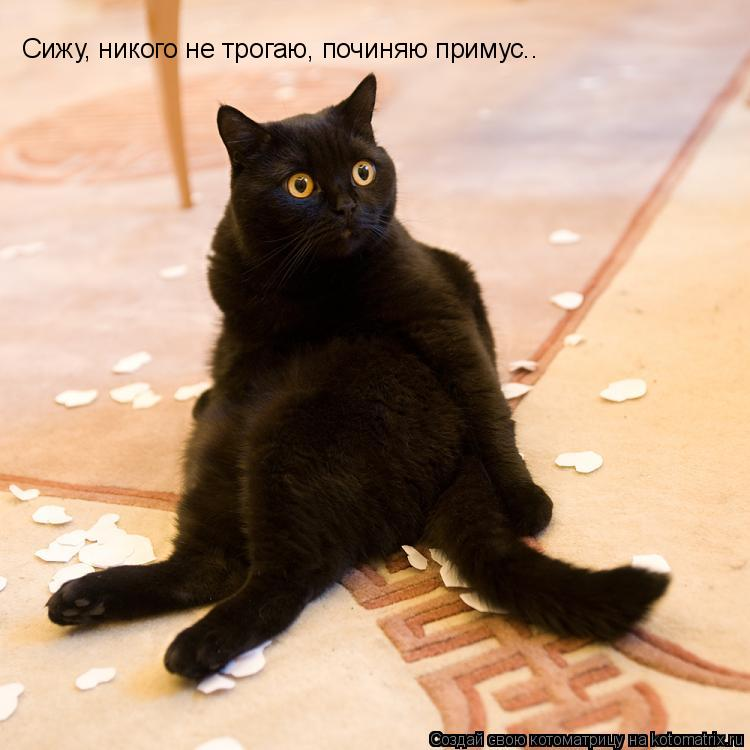 Котоматрица: Сижу, никого не трогаю, починяю примус..