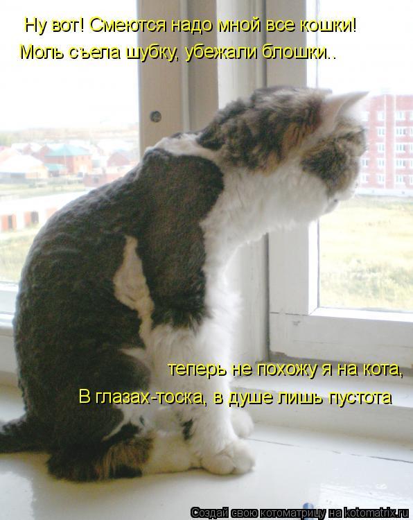 Котоматрица: Ну вот! Смеются надо мной все кошки! Моль съела шубку, убежали блошки.. теперь не похожу я на кота, В глазах-тоска, в душе лишь пустота