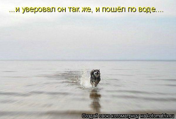 Котоматрица: ...и уверовал он так же, и пошёл по воде....