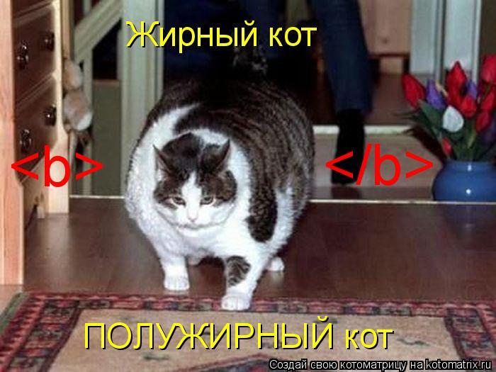 Котоматрица: Жирный кот ПОЛУЖИРНЫЙ кот <b> </b>