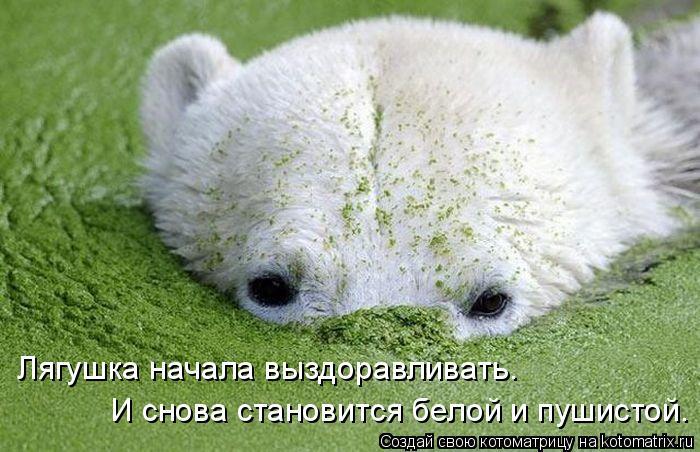 Котоматрица: Лягушка начала выздоравливать.  И снова становится белой и пушистой.