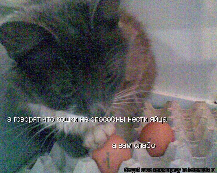 Котоматрица: а говорят что кошки не способны нести яйца а вам слабо