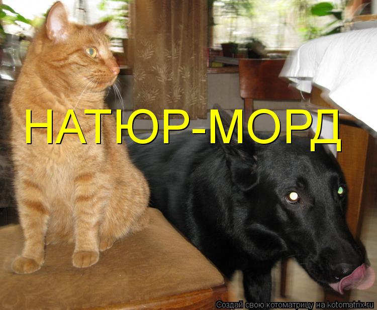 Котоматрица: НАТЮР-МОРД