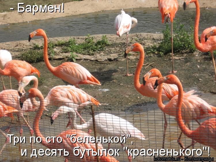 """Котоматрица: - Бармен!   Три по сто """"беленькой"""", и десять бутылок """"красненького""""!"""