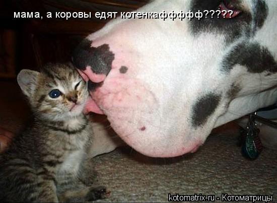 Котоматрица: мама, а коровы едят котенкаффффф?????