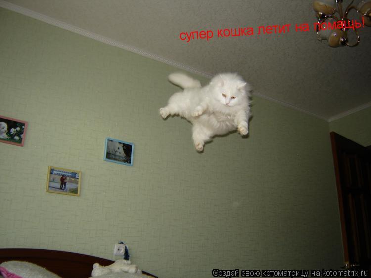 Котоматрица: супер кошка летит на помащь!