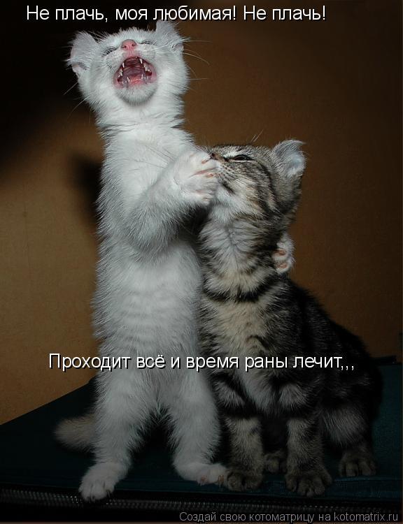 Котоматрица: Не плачь, моя любимая! Не плачь!   Проходит всё и время раны лечит,,,