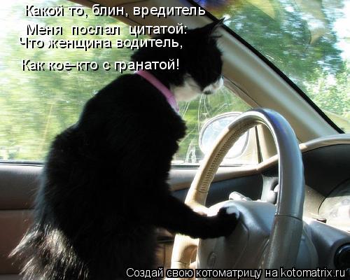 Котоматрица: Какой то, блин, вредитель  Меня «послал» цитатой:  Что женщина водитель,  Как кое-кто с гранатой!