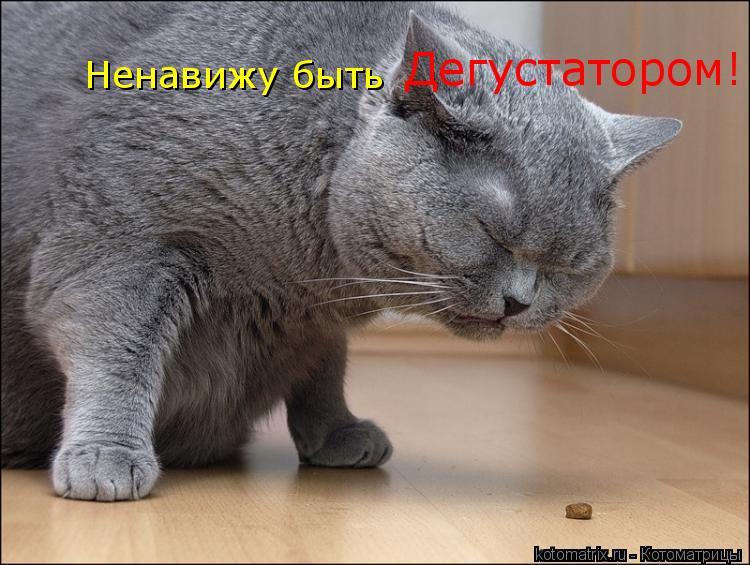 Котоматрица: Ненавижу быть Дегустатором!