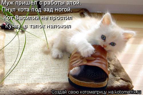 Котоматрица: Муж пришёл с работы злой.  Пнул кота под зад ногой.  Кот Василий не простил «Кучку» в тапок наложил