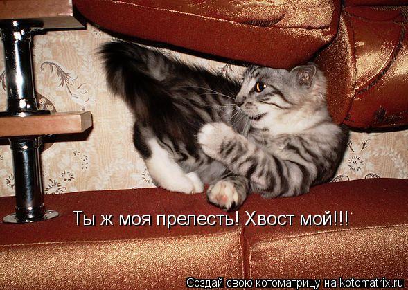 Котоматрица: Ты ж моя прелесть! Хвост мой!!!