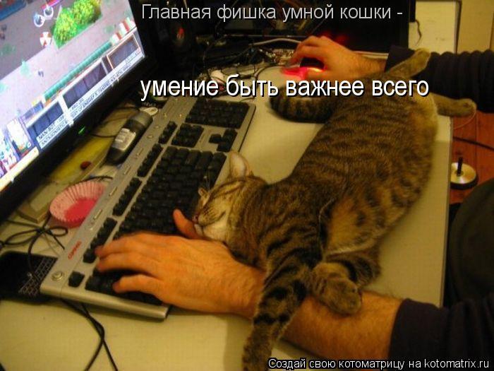 Котоматрица: умение быть важнее всего Главная фишка умной кошки -