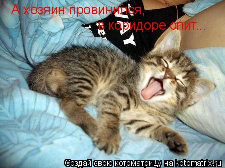 Котоматрица: А хозяин провинился, в коридоре спит...