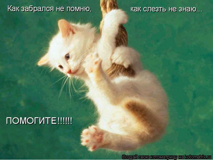 Котоматрица: Как забрался не помню, как слезть не знаю... ПОМОГИТЕ!!!!!!