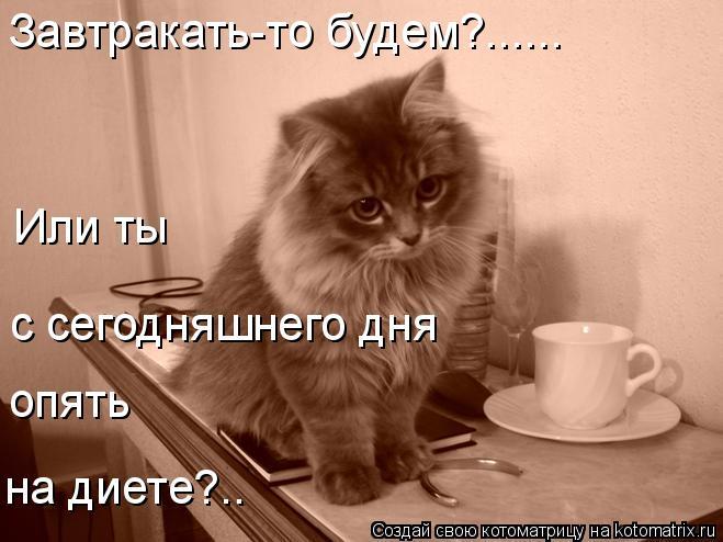 Котоматрица: Завтракать-то будем?...... Или ты  с сегодняшнего дня опять на диете?..
