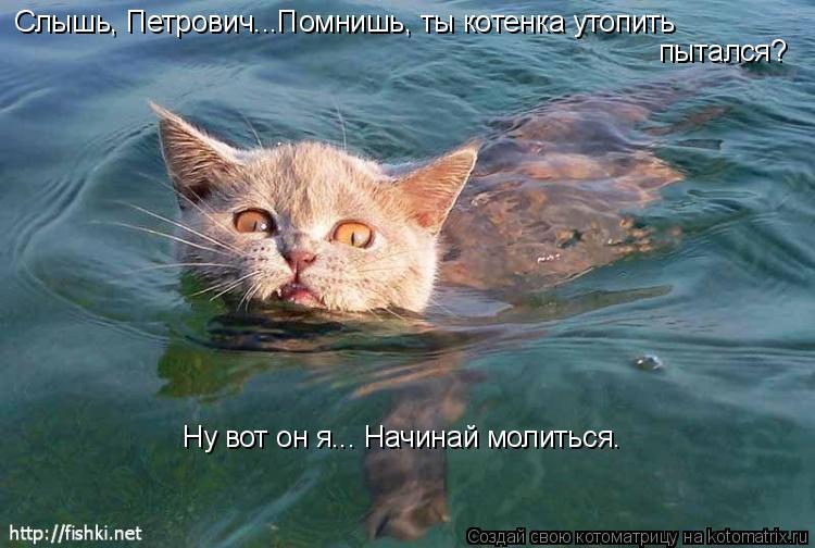 Котоматрица: Слышь, Петрович...Помнишь, ты котенка утопить пытался? Ну вот он я... Начинай молиться.