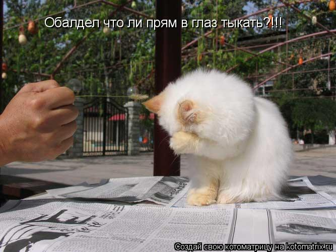 Котоматрица: Обалдел что ли прям в глаз тыкать?!!!