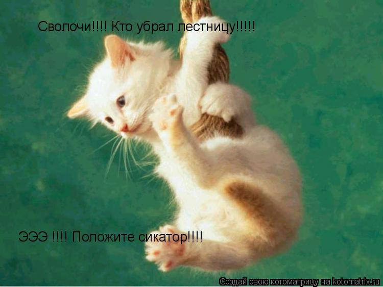 Котоматрица: Сволочи!!!! Кто убрал лестницу!!!!! ЭЭЭ !!!! Положите сикатор!!!!