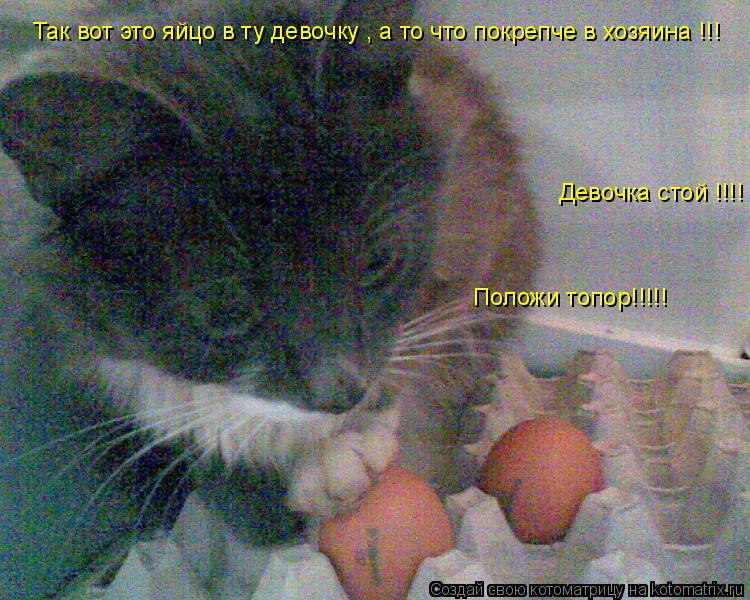 Котоматрица: Так вот это яйцо в ту девочку , а то что покрепче в хозяина !!! Девочка стой !!!! Положи топор!!!!!