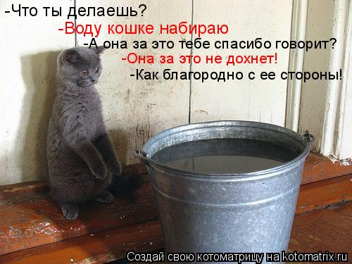 Котоматрица: -Что ты делаешь? -Воду кошке набираю -А она за это тебе спасибо говорит? -Она за это не дохнет! -Как благородно с ее стороны!
