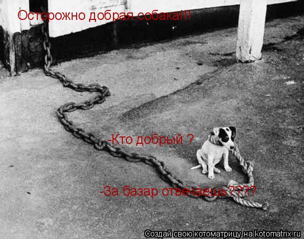 Котоматрица: Осторожно добрая собака!!! -Кто добрый ? -За базар отвечаешь????